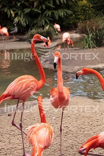 Bird royalty free stock image #958226627