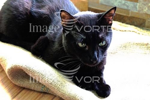 Animal / wildlife royalty free stock image #960262272
