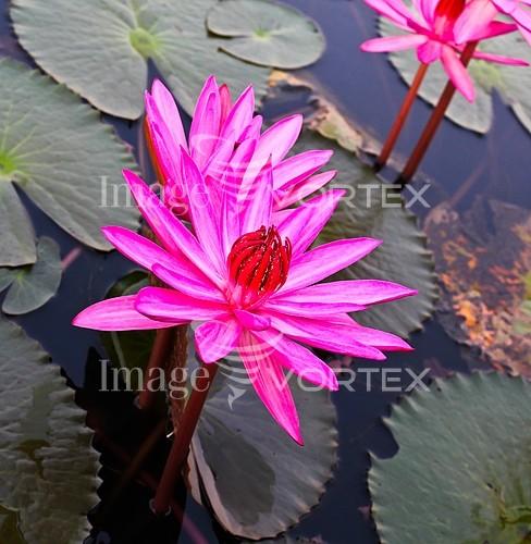 Flower royalty free stock image #960467832
