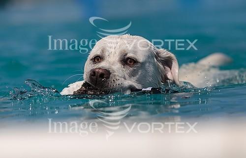 Animal / wildlife royalty free stock image #964372341