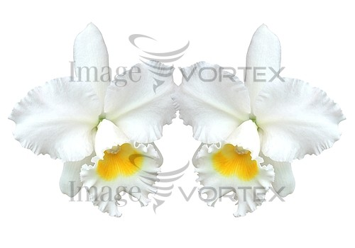 Flower royalty free stock image #967429514