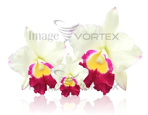 Flower royalty free stock image #967195710