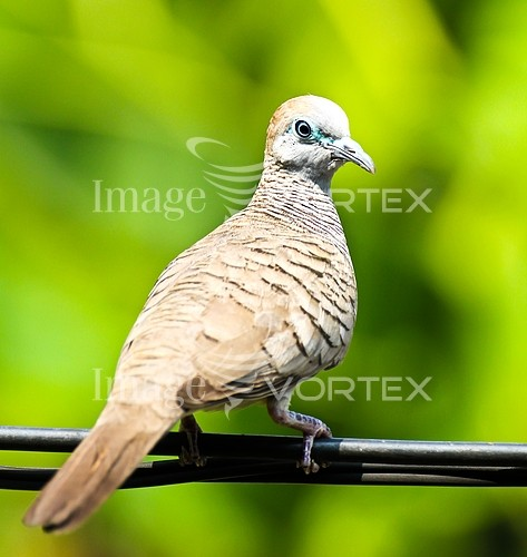 Bird royalty free stock image #970065085