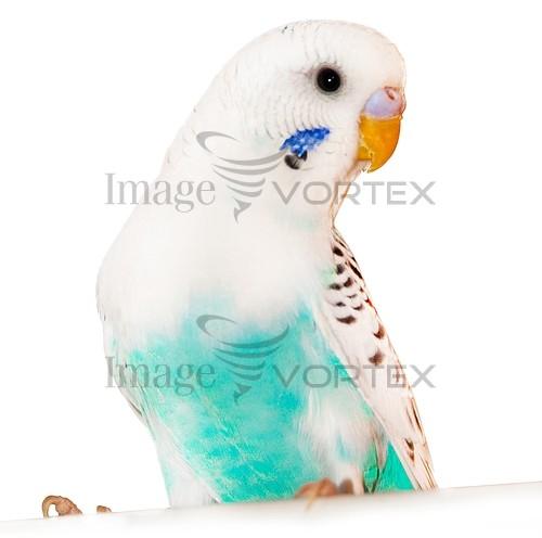 Animal / wildlife royalty free stock image #980894436