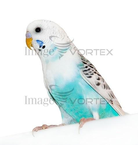 Animal / wildlife royalty free stock image #980901327