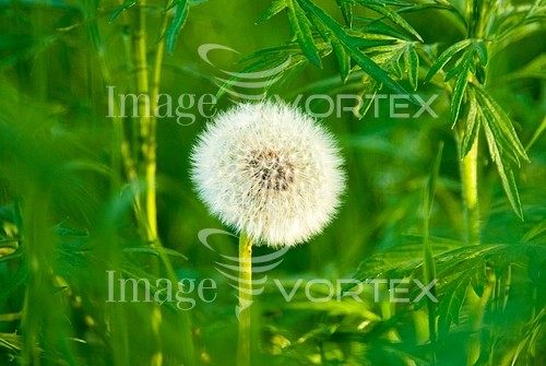 Flower royalty free stock image #981999227