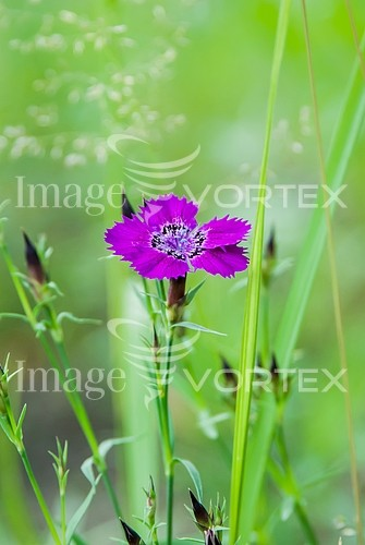 Flower royalty free stock image #982007270