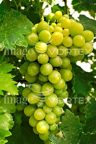 Food / drink royalty free stock image #983914461