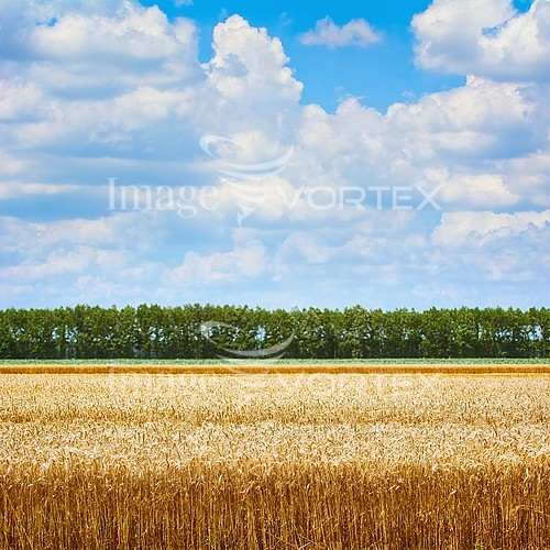 Nature / landscape royalty free stock image #984755555