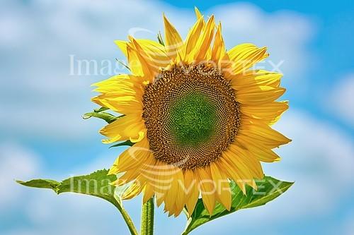 Nature / landscape royalty free stock image #985948267