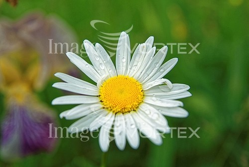 Flower royalty free stock image #987644259