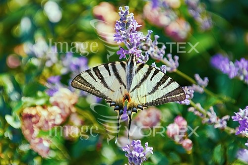 Animal / wildlife royalty free stock image #987727422