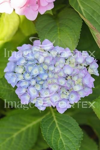 Flower royalty free stock image #990651432