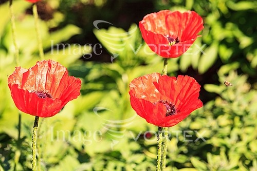 Flower royalty free stock image #990456025