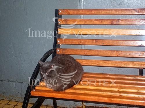 Animal / wildlife royalty free stock image #990007788