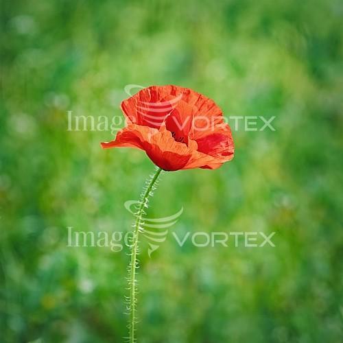 Nature / landscape royalty free stock image #991583166