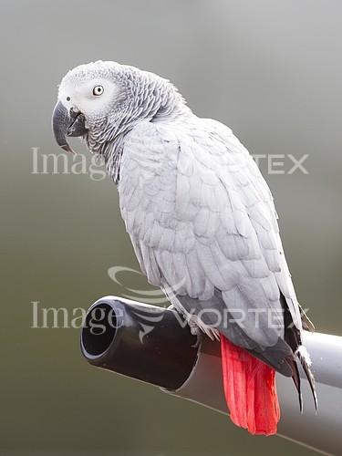Animal / wildlife royalty free stock image #992980981
