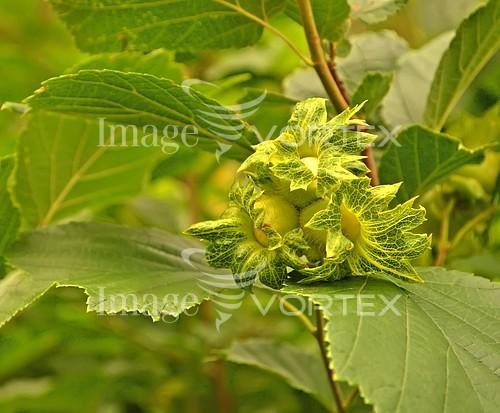 Flower royalty free stock image #992756417