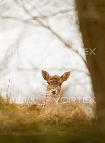 Animal / wildlife royalty free stock image #993137849
