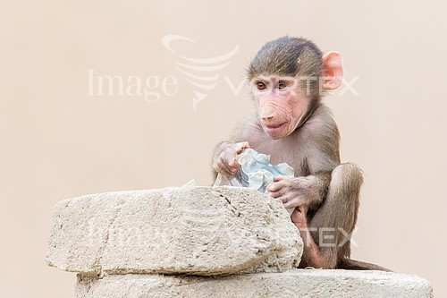 Animal / wildlife royalty free stock image #993025857