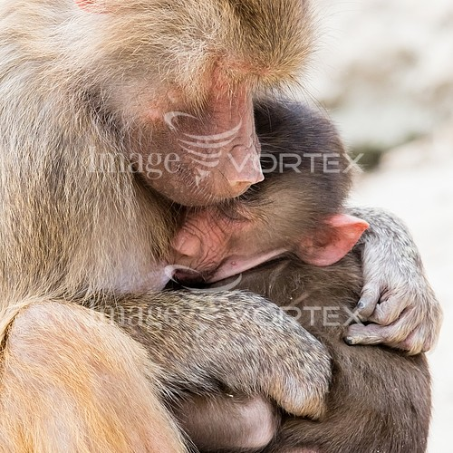 Animal / wildlife royalty free stock image #993030882