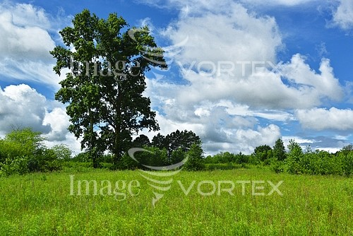 Nature / landscape royalty free stock image #993639776