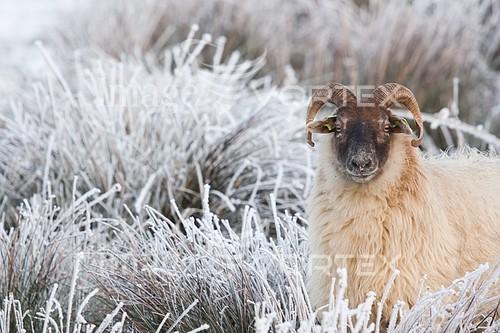 Animal / wildlife royalty free stock image #993148196
