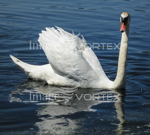 Animal / wildlife royalty free stock image #994000742