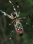 Arachnid royalty free stock image - click to enlarge