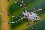 Insects / Spiders 159006635