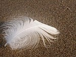 Feathery royalty free stock image - click to enlarge