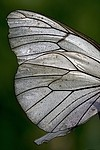 Wing royalty free stock image - click to enlarge