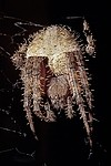 Insects / Spiders 318069325