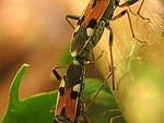 Insect royalty free stock image - click to enlarge