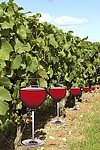 Wine / glass royalty free stock image - click to enlarge