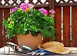 Gardening royalty free stock image - click to enlarge