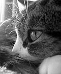 Pet / Cat / Dog royalty free stock image - click to enlarge