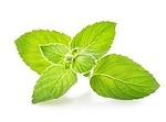 Mint royalty free stock image - click to enlarge
