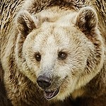 Carnivore royalty free stock image - click to enlarge