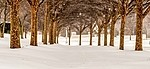 Snowing royalty free stock image - click to enlarge