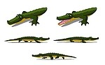 Crocodile royalty free stock image - click to enlarge
