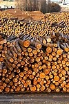 Wood royalty free stock image - click to enlarge