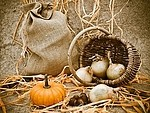 Autumn royalty free stock image - click to enlarge